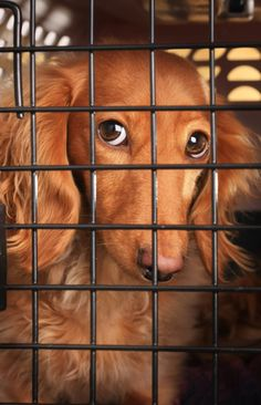 BBS Training Tips #9: Crate Training - Learn about this incredibly useful training tool on the BBS Healthy Dog Blog #dogs #woof #dogcrates //BestBullySticks.com