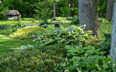 Woodland Shade Garden | shade garden
