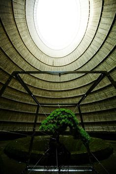 Azuma Makoto, known for his powerful botanical installations, installed a bonsai tree in the middle of a disused Belgian power plant. The bright green tree hovers in the center of a metal structure, suspended with chords wrapped around its branches. The opening at the top of the cavernous space provides a spotlight on the small tree. The piece holds a powerful message of nature vs. industrialization with the tree growing in a space that has the potential to harm the surrounding environment.