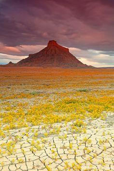 ひび割れた大地に咲き誇る花々が美しいと話題に   三つ目横丁