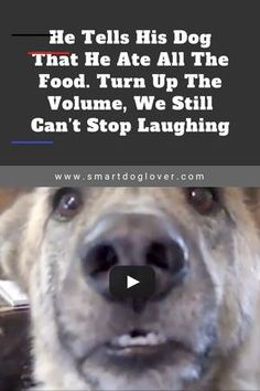 These funny videos of funny dogs will make you laugh. Hope you enjoy these funny dog videos. This funny dogs compilation doesn't include funny dog vines. Funny Animal Videos, Cute Funny Animals, Funny Animal Pictures, Funny Cute, Funny Animal Jokes, Adorable Pictures, Hilarious Memes, Videos Funny, Dog Quotes Funny