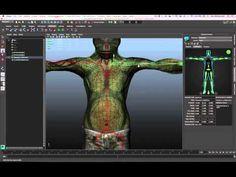 Skeleton Creation and Adjustment (Pt. 1) - Maya LT 2015 - Autodesk - YouTube