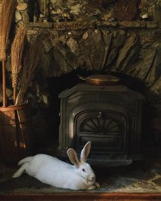 Where the witch rabbit rests. Always with one eye here. Always with the other half of herself flying over pine trees.
