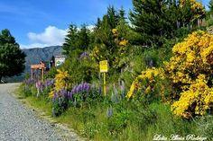 Primavera. Chubut. Patagonia. Argentina