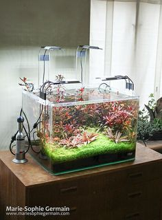 "My Dennerle Scaper's Tank, ""Dragons' Sunset"", after 8 months - by Marie-Sophie Germain"