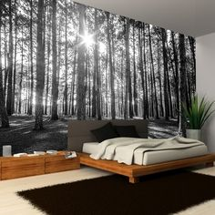 Rainbow Black White Woodland Forest Mural Photo Giant Wall Decor R223