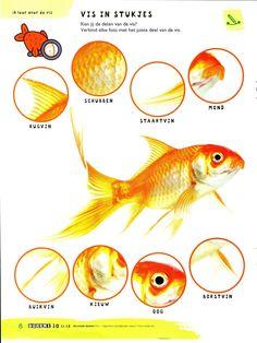 Huisdieren: De vis: delen The Ocean, Diep, Beautiful Fish, Sea Fish, School Themes, Pet Shop, Animals And Pets, Animales, Aquarius