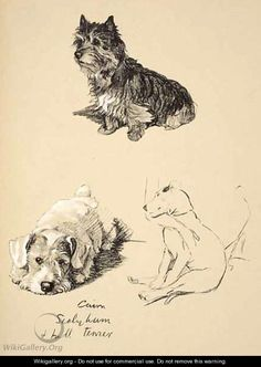 Cairn, Sealyham and Bull Terrier - Cecil Charles Aldin
