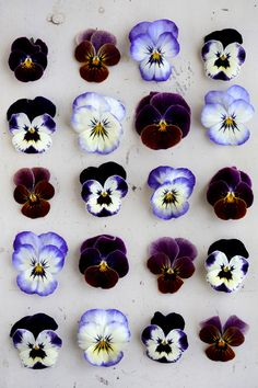 """I have loved the """"happy faces"""" of pansies ever since I was a little girl. My clearest memory of my Poppa is standing admiring the Pansies with him. Ikebana, Orquideas Cymbidium, Illustration Blume, No Rain, Pansies, Lilacs, Planting Flowers, Flowers Garden, Iphone Wallpaper"""