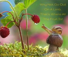 Why Not Go Out On A Limb, That's Where All The Fruit Is! #GoForIt #choosehappy