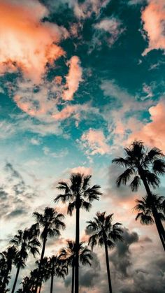 blue sky with clouds, tall palm trees, aesthetic iphone wallpaper Tumblr Wallpaper, Wallpaper Backgrounds, Iphone Backgrounds, Tree Wallpaper, Cute Backgrounds For Phones, Wallpaper Quotes, Drawing Wallpaper, Beach Wallpaper, Wallpaper Ideas