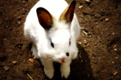 Bunnies and other cute animals
