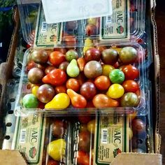 10lb of organic heirloom grape tomatoes from co-op today! Co-op today! #cleaneating #eatclean #healthy #healthyeating #healthymeals #healthyfood #food #foodie #fitfam #fitness #fit #healthykids #realfood #instafood #igmeals #igfood #paleo #traindirtyeatclean #organic #busymom #intermittentfasting #whole30 #bountifulbaskets #diet #noexcusemom #foodprep #juicing #nutrition by huntersmomma7