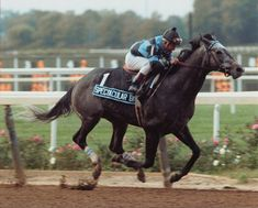 Spectacular Bid, Kentucky Derby and Preakness winner of 1979 and Horse of the Year in Missed winning the Triple Crown when he finished in the Belmont behind Coastal. Preakness Winner, Preakness Stakes, All The Pretty Horses, Beautiful Horses, Saratoga Horse Racing, Derby Horse, Derby Winners, Sport Of Kings, Thoroughbred Horse