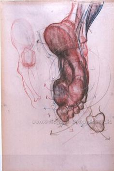 #Anatomy #Feet Burne Hogarth - Chalk art A study of the human foot by Hogart, very accurate and detailed drawing, the leg is actually in movement making the study very interesting as far as how the muscles stretch accordingly. (burnehogarth, 2010)