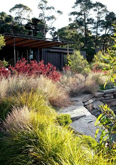 1780 Best Australian Native Gardens images in 2019 ...
