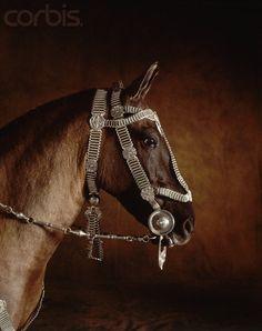 Beautiful bridle