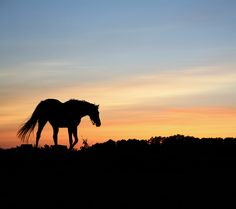 This striking mural brings the beauty of the sunset to your walls, seen beyond a charming horse silhouette #wallpaper #sunset