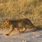Julius Tact Safaris (Nairobi) - 2020 All You Need to Know Before You Go (with Photos) - Nairobi, Kenya Nairobi, Kenya, Trip Advisor, Safari, Africa, Animals, Animales, Animaux, Animal