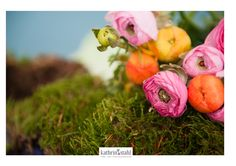 Fotosession, Blumen, Fine Art Photographer Kathrin Stahl07