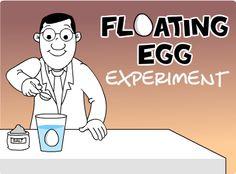 Floating Egg Experiment