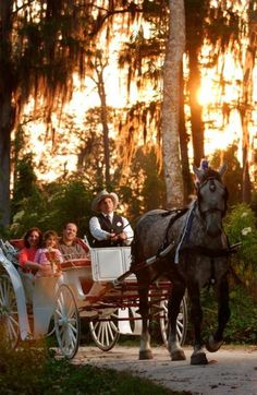 Carriage Rides at Port Orleans Riverside Resort-so romantic!