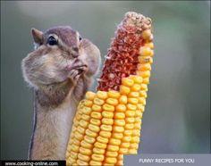fun hamster with corn