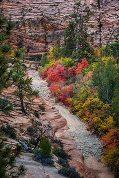 Zion National Park, Utah by David L Bogard on 500px
