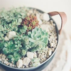Just add succulents to our hanging planter! http://storycompany.com/collections/new-arrivals/products/clay-hanging-pot-planter