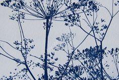 Stems. Cyanotype. Kath Williamson
