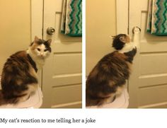 Tough crowd: | 27 Cat Pictures That Are Never Not Funny
