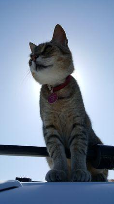 Land's End Cat