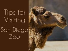 Bucket List Item - Visit San Diego Zoo with Athena  http://www.bucketlistpublications.com/2015/04/13/tips-for-visiting-san-diego-zoo/