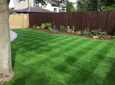 Lawncare treatments - Sulgrave, Northamptonshire Lawn Care, Sidewalk, Green, Lawn Maintenance, Side Walkway, Walkway, Walkways, Pavement