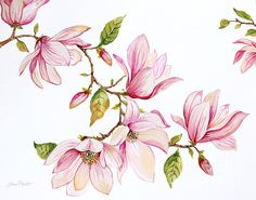 Check out this new painting that I uploaded to plout-gallery.pixels.com! http://plout-gallery.pixels.com/featured/magnolias-jp3875-jean-plout.html