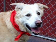 SUPER URGENT 7/7/14 Manhattan Center   CACHE - A1005636   MALE, YELLOW / WHITE, LABRADOR RETR MIX, 9 yrs OWNER SUR - EVALUATE, HOLD FOR COURTESY Reason OWN EVICT  Intake condition NONE Intake Date 07/05/2014, From NY 10467, DueOut Date 07/07/2014, I came in with Group/Litter #K14-184695.  https://www.facebook.com/photo.php?fbid=833861116626769set=a.617942388218644.1073741870.152876678058553type=3theater