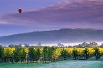 Hot air balloon and clouds at sunrise over vineyards near Oakville, Napa  Valley, Napa County, California To learn more about the #NapaValley Wine Trolley and our tours click here: https://www.napavalleywinetrolley.com/