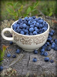Blueberries - I am the daughter of a Blueberry farmer:) Blueberries are a great childhood memory for me.