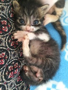 A kind-hearted woman found the tiniest kitten she had ever seen and went on an incredible journey to save the kitty. 	Meet Chili the miracle cat! 	 On the day he was rescued (left), 14 hours after (right)Photo: Joan Bowell of God's Little People Joan Bowell has rescued and cared for many cats on a...