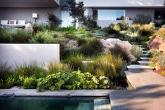 Aussenanlage in South Africa: moderner Garten von Paul Marie Creation