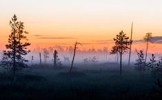 Sarvipää sumussa. Forest Painting, Tree Leaves, Best Cities, Four Seasons, Finland, Painting & Drawing, Wilderness, Amazing Photography, Mists