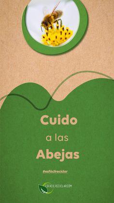 Las abejas son nuestras aliadas. ¡Cuídalas! Puedes poner naranjas en tu patio o jardín para que coman y se hidraten. #DíaMundialDeLasAbejas #EsFácilReciclar #UnaAccionUnMundo #PequeñasAcciones #DefiendeAlMundo #MiMundo #OneEarth #3R #Recicla #Reusa #Reduce #Reciclaje #SomosHeroes #Tierra