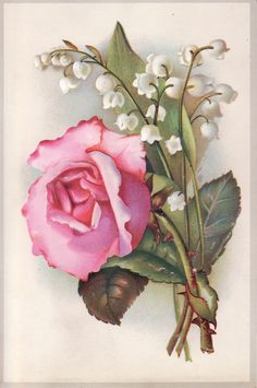 Antique Victorian Scrap Diecut Picture Card Pink Rose Lily of The Valley | eBay