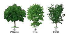 Las cinco especies con presencia más notoria en la ciudad  Cinco especies.