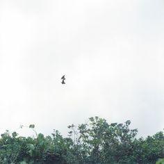 Photograph by Rinko Kawauchi - from Utatane