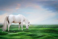Unicorn, Dreamy, Fantasy, digitaler Backdrop, download, Photo Manipulation, Art, Print, Sky, Grass von HispaniolaFineart auf Etsy