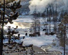 Yellowstone.....I will visit in the winter before I'm dead.