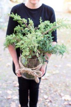 Plants, Instagram, Plant, Planets