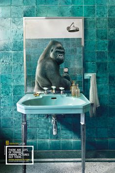 Diomedia / National Geographic: Gorilla | #ads #adv #marketing #creative #print #poster #advertising #campaign