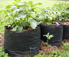 Easy tutorial for making cheap potato grow bags from landscape/weed block fabric || Recommended by FrugalinFortWorth.com